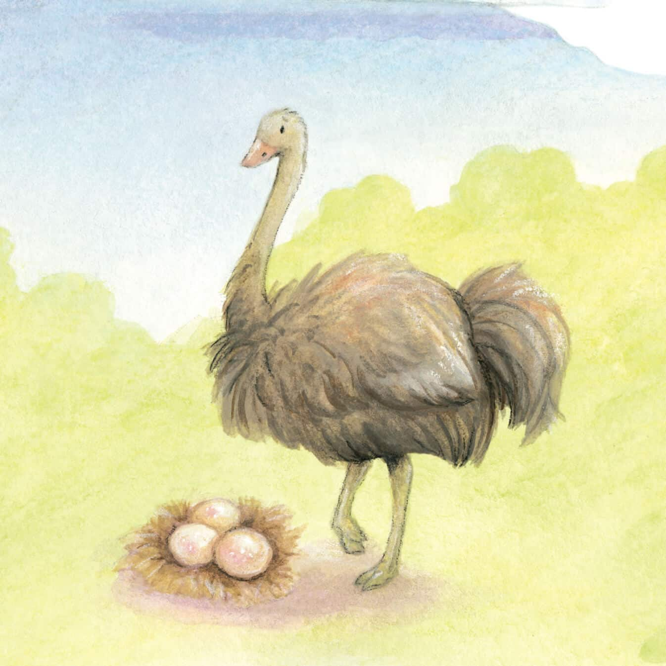 olivia the ostrich illlustrated character from guion the lion